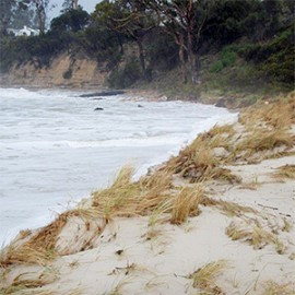 Eroding sand dune during a storm at Spring Beach, southern Tasmania.