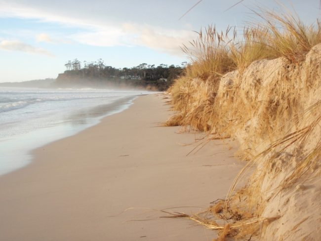A 1.5m high erosion scarp at Spring Beach near Orford in southeastern Tasmania.