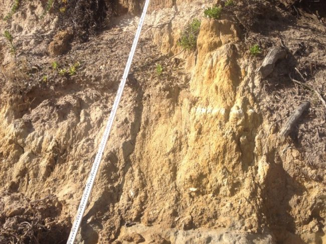 The vertical face of a 5m high actively eroding soft shoreline