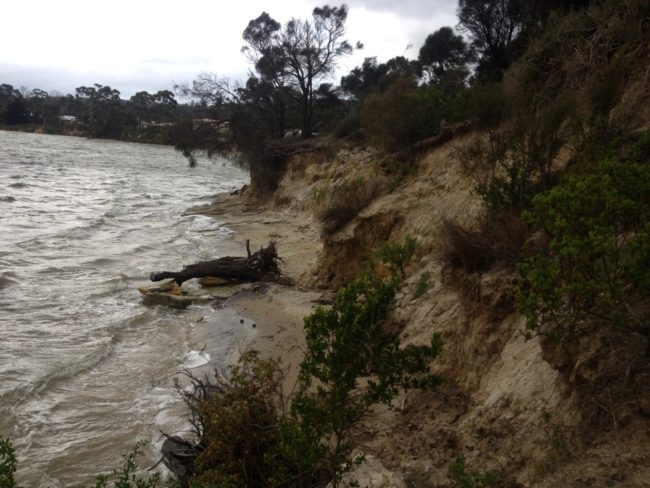 An actively eroding, soft shoreline at Dodges Ferry in southeastern Tasmania